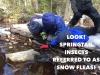 snow-fleas